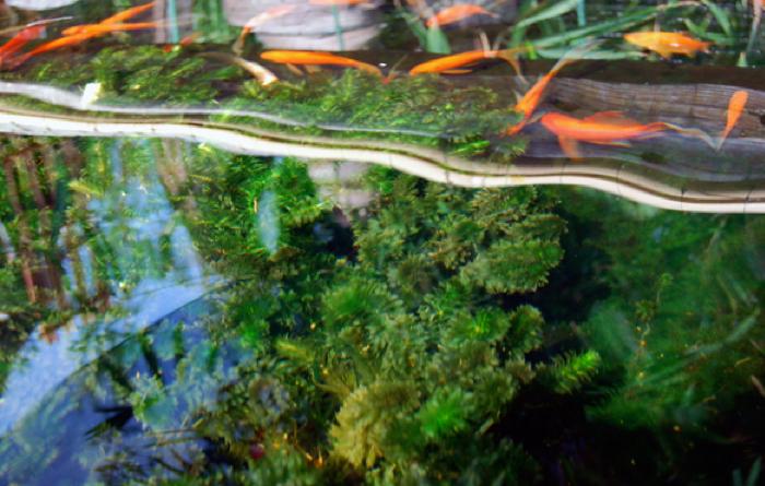 Beautiful koi pond installation